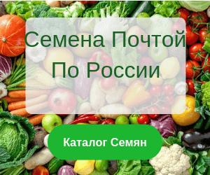 Зеленая тыква: 20 интересных сортов с фото - дачные советы.ру