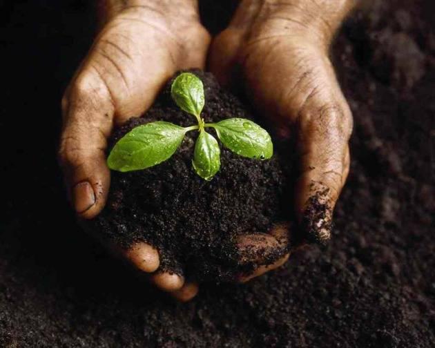 Подкормка органическими удобрениями: применение, нормы, список производителей (сравнение), состав и свойства