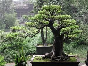 Декоративные деревья для сада: названия, описания и фото. самые красивые деревья для ландшафтного дизайна