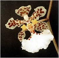 Орхидеи в природе: где растут и как размножаются