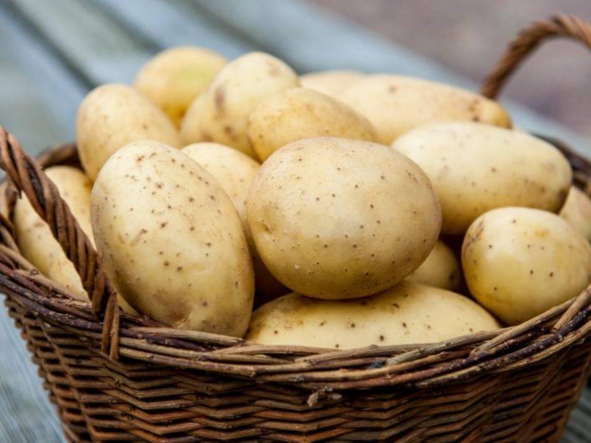 Красавица без недостатков — картофель «агата» : описание сорта, характеристика, фото