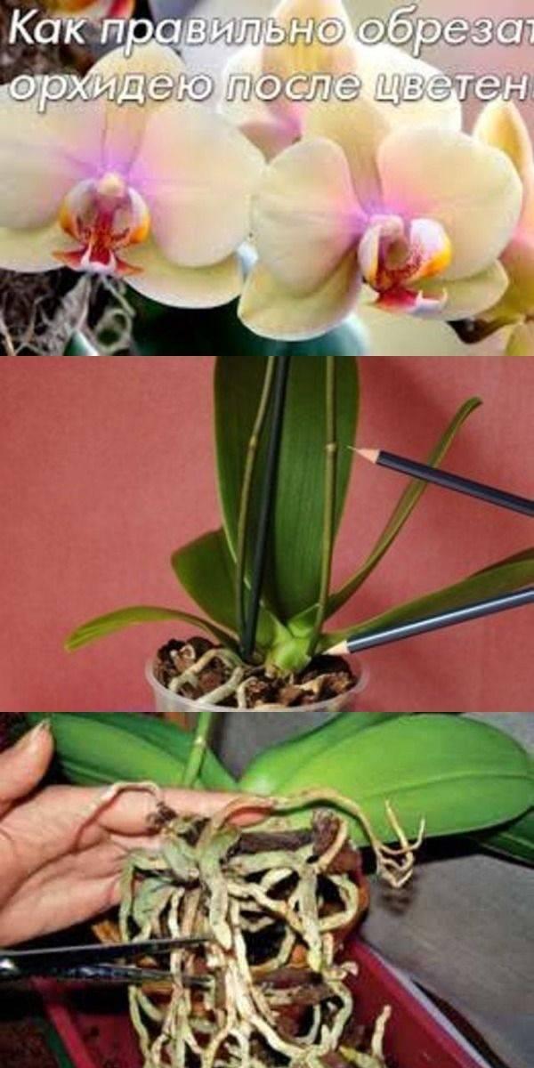 Нужно ли обрезать орхидею после цветения: что делать после того, как она отцвела, как правильно это делать