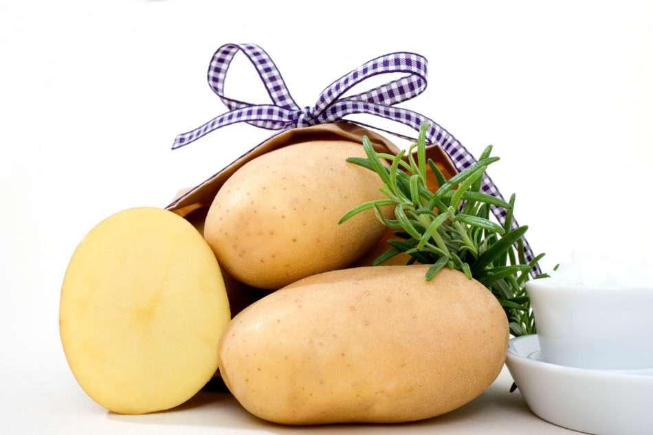 Картофель джелли: характеристика сорта, сроки созревания и вкусовые качества