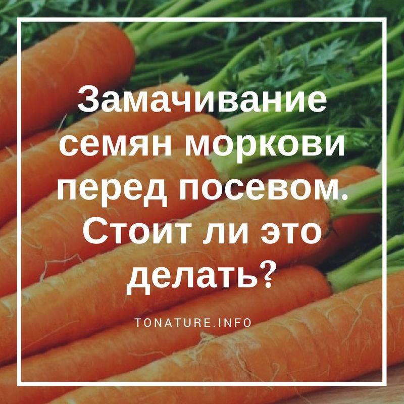 Правила замачивания семян моркови до посадки