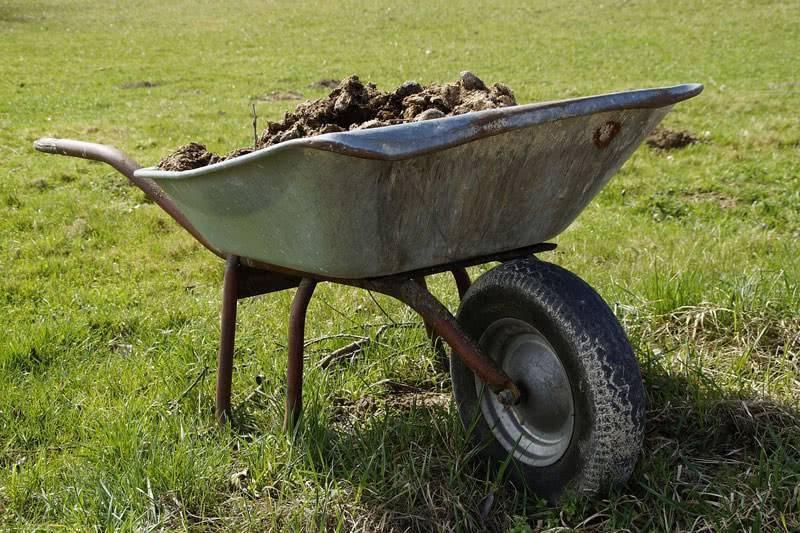 Применяем навоз как удобрение: конский, кроличий, куриный, коровий, свиной, жидкий и сухой, а также готовые смеси (фото & видео) +отзывы