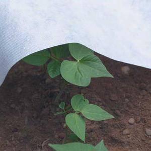 Агроволокно: применение, что это такое и какие бывают виды