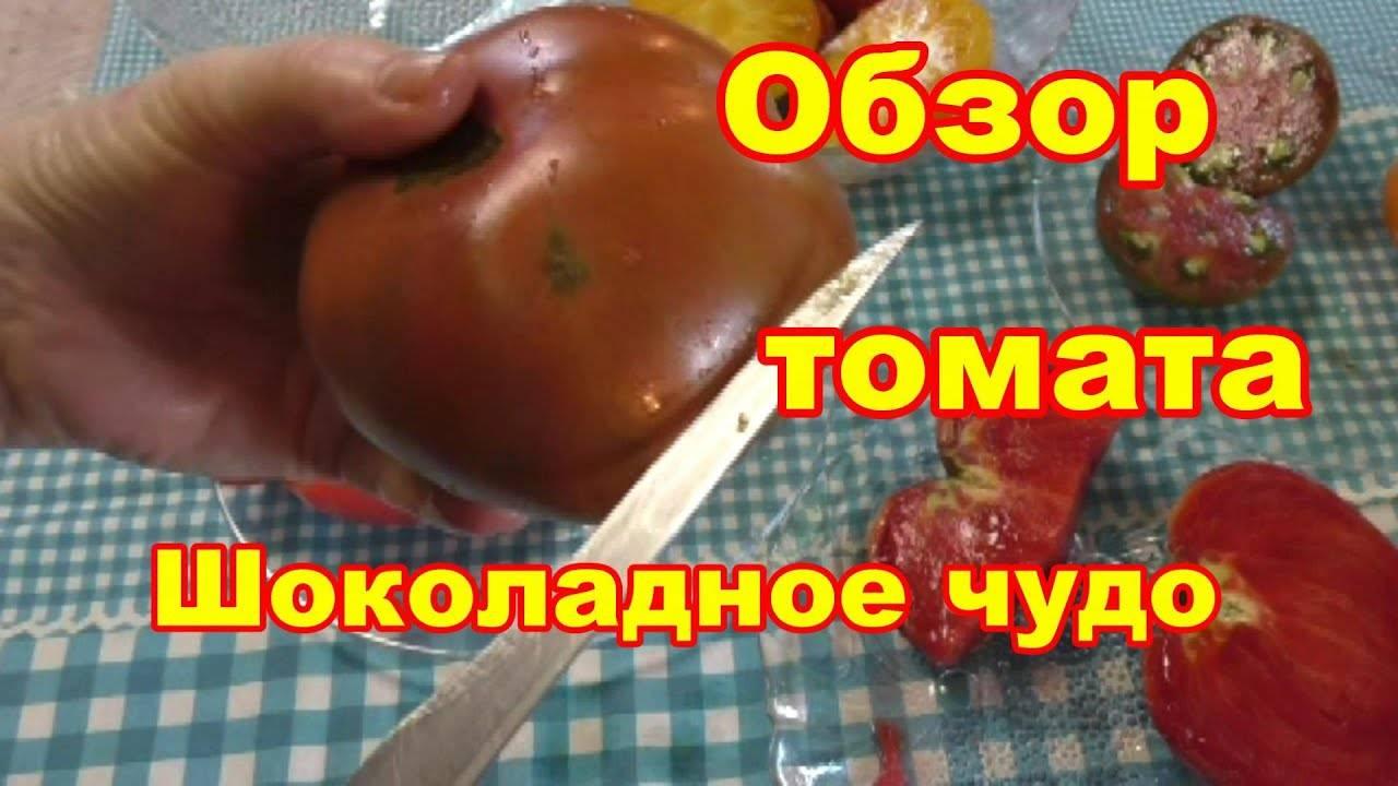 """Томат """"шоколадное чудо"""": описание сорта с фото, рекомендации по уходу за помидором русский фермер"""
