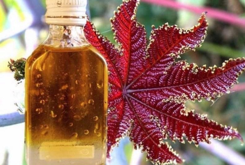 Подкормка растений касторовым маслом - правила приготовления и применения средства