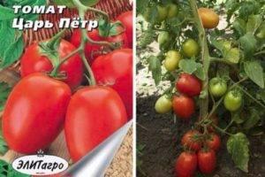 Характеристика и описание сорта томата бони мм, его урожайность