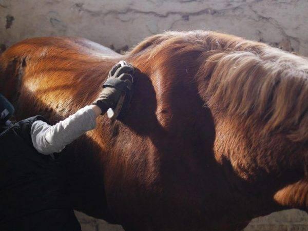 Русская порода лошадей: знаменитый орловский рысак