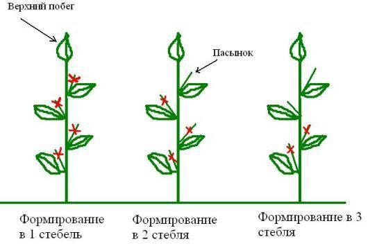 Баклажан: справочник огородника по выращиванию | good-tips.pro
