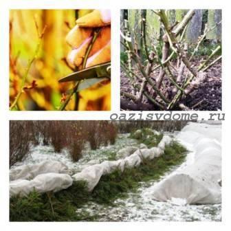 Подготовка к зиме и укрытие клематисов: инструкция + видео