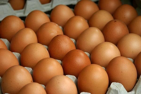 Тонкая скорлупа у куриных яиц — что делать и чем кормить птицу