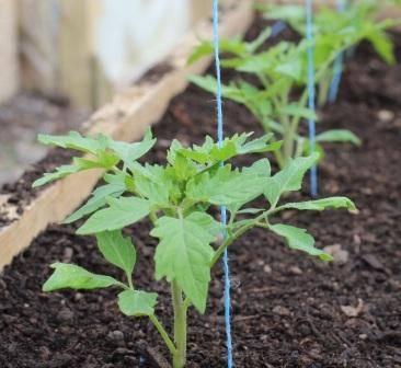 Парник для помидоров своими руками, несколько вариантов несложных парников, их фото русский фермер