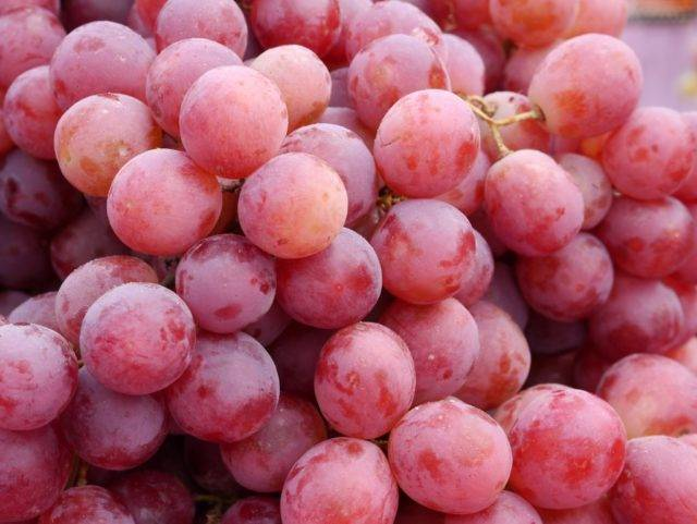 Виноград велес: особенности, достоинства и недостатки сорта