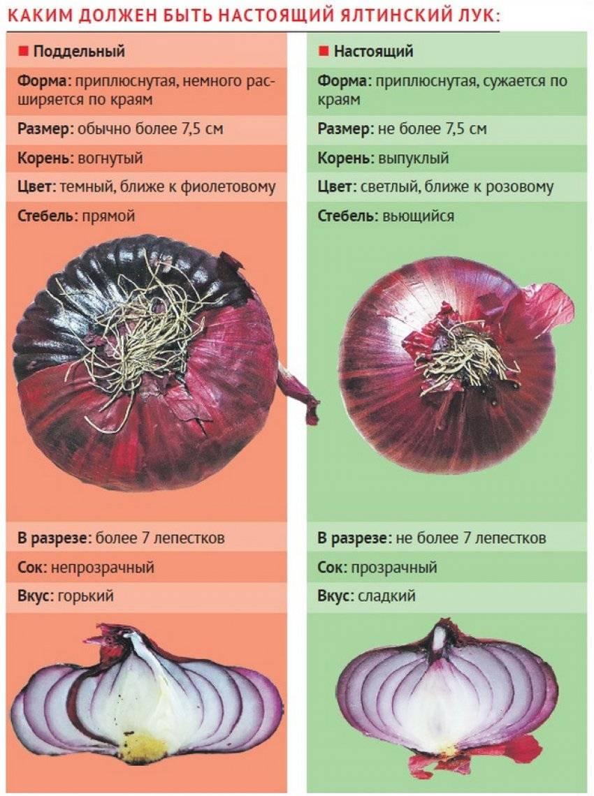 Как вырастить ялтинский лук из семян - всё о землеводстве