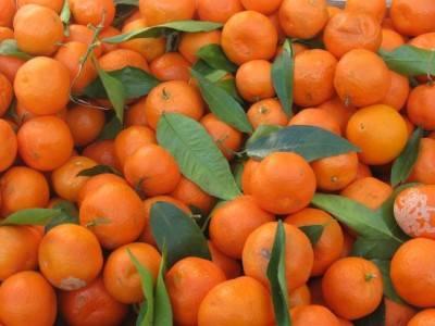 Сонник мандарин  приснился, к чему снится мандарин во сне видеть?