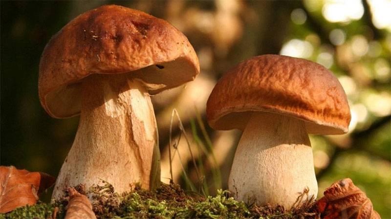 Грибы и паразиты в организме, грибы рода кандида.