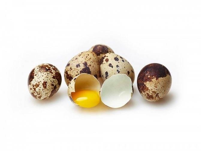 Инкубация перепелиных яиц дома