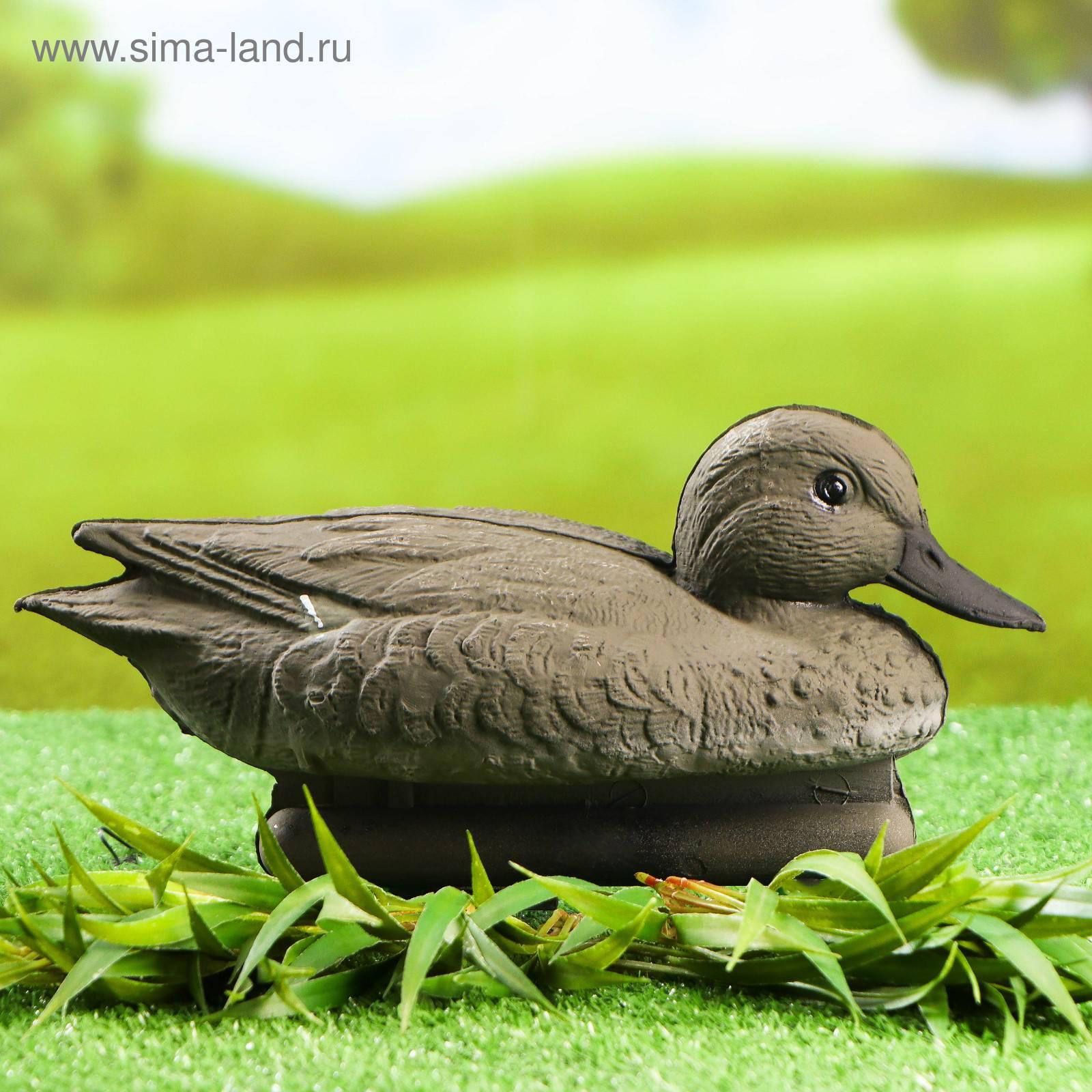 Чирок-свистунок – самая маленькая дикая утка