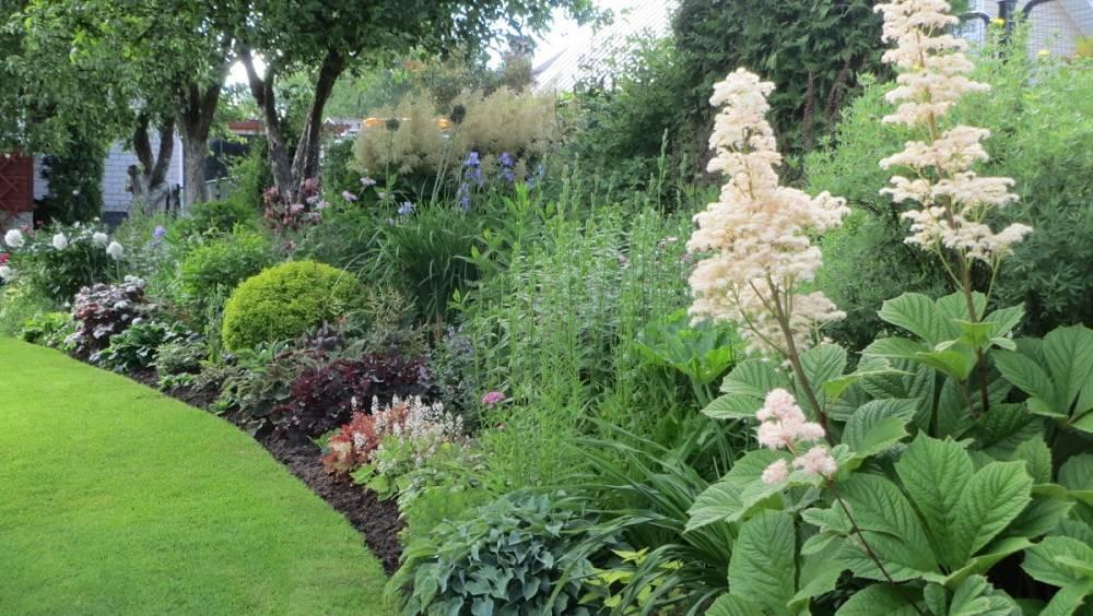 Роджерсия посадка и уход в открытом грунте в сибири - сад и огород
