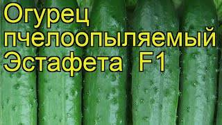 Описание и преимущества сорта огурцов «эстафета f1»