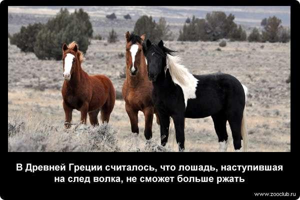Необычные и интересные факты о лошадях — 4 лапки
