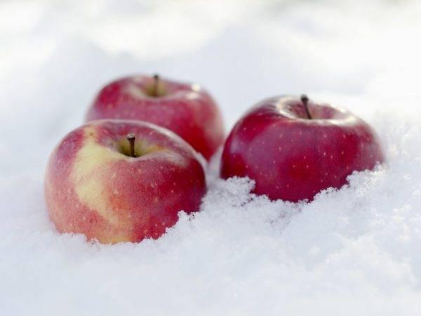 Полезные советы, как заморозить яблоки на зиму