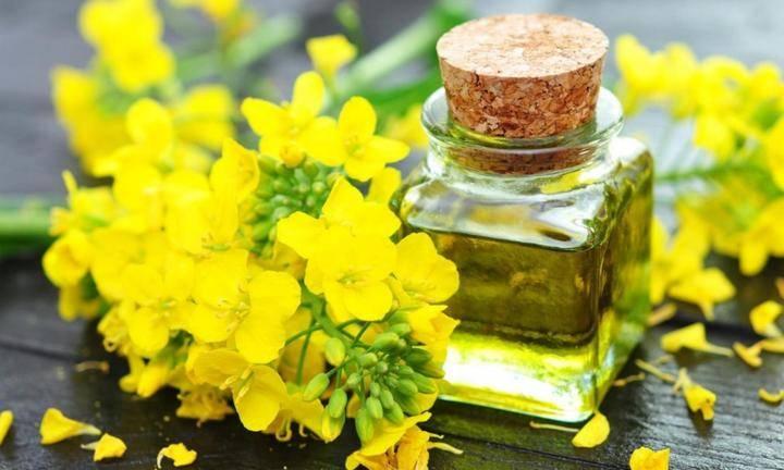 Рыжиковое масло – польза, вред и противопоказания в косметологии