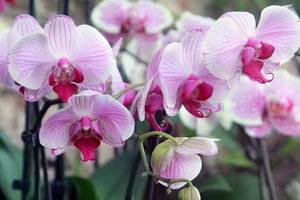 Самые распространенные виды комнатных орхидей