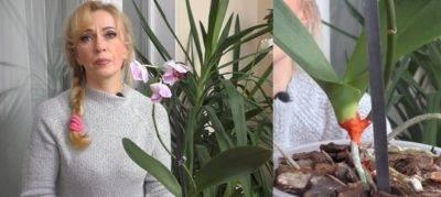 Орхидея в керамзите: секреты выращивания. как поливать и посадить? нужен ли керамзит для орхидеи?