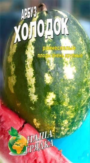 """Арбуз холодок: описание """"зимнего""""(позднего) сорта, фото плодов, нюансы агротехники"""