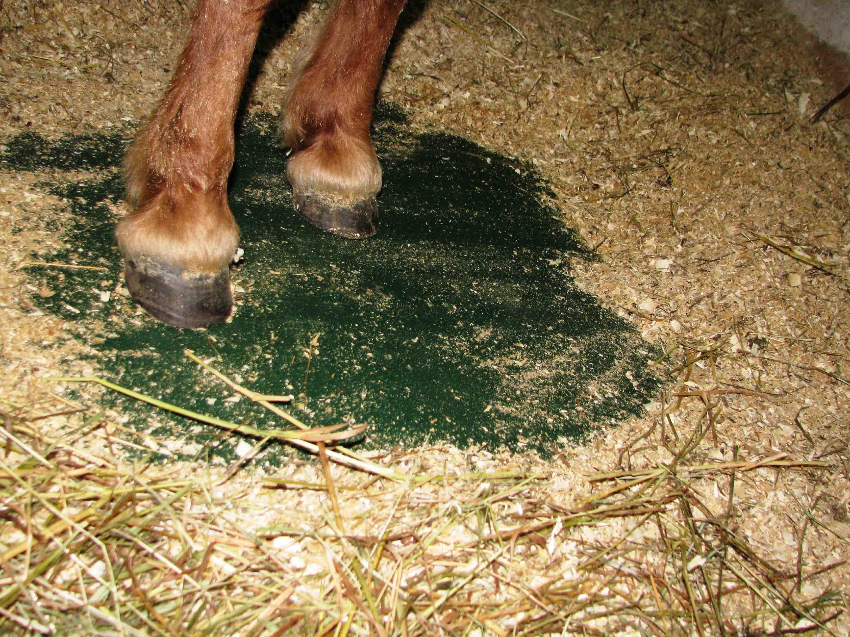 Как сделать стойло для лошади: бокс, размеры, пол, стены и двери