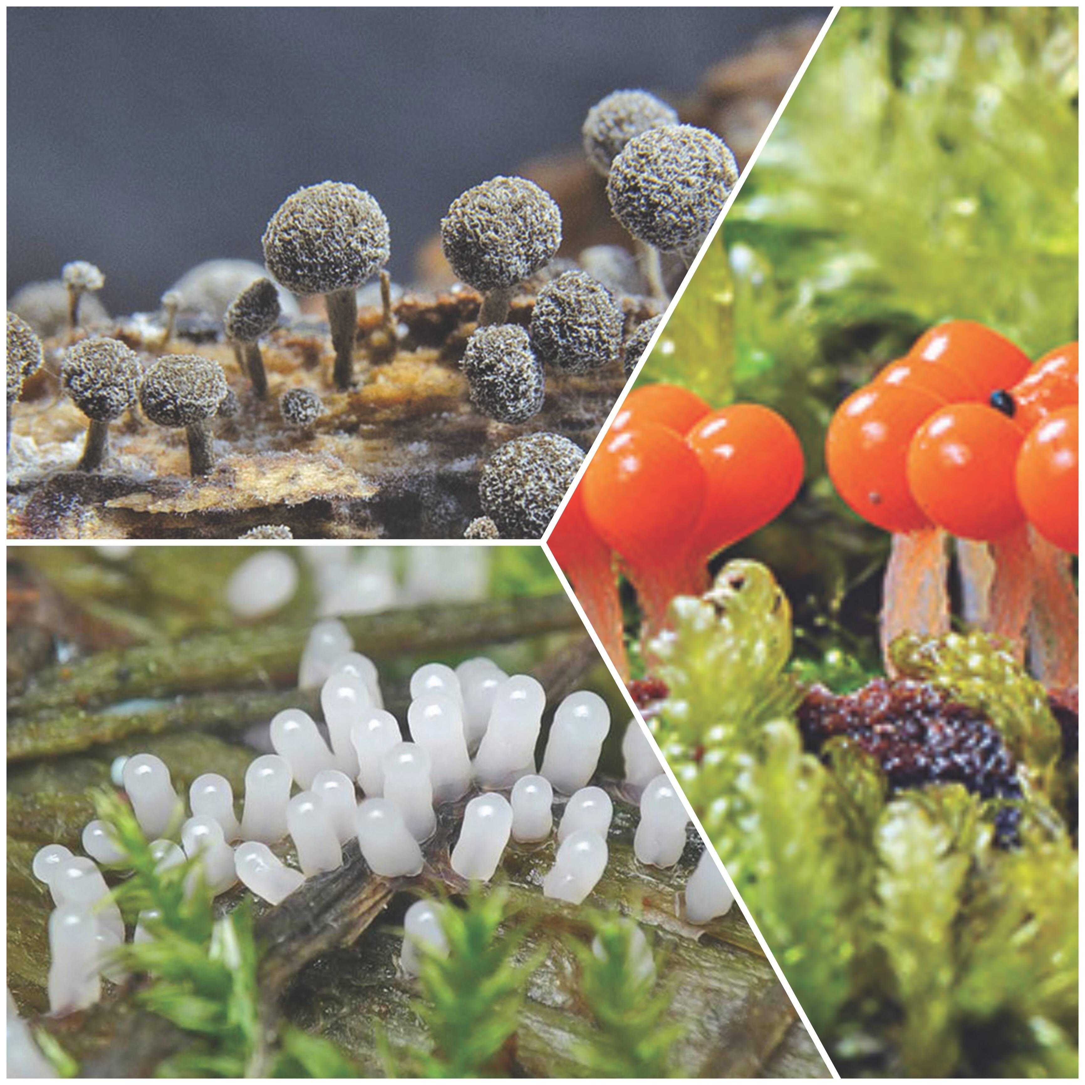 Примитив неприговор, или physarum polycephalum разумный