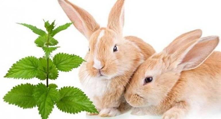 Можно ли давать кроликам свежую крапиву