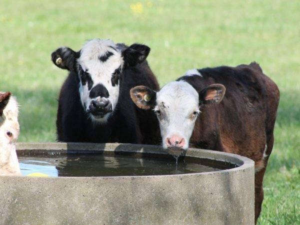 Поилки для крс (коров) своими руками: пошаговая инструкция, фото, видео