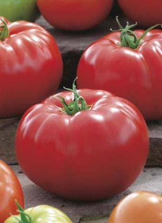 Лучшие сорта биф-томатов | огородники