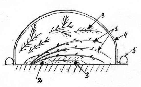 Правила укрытия гортензии на зиму в подмосковье и сибири