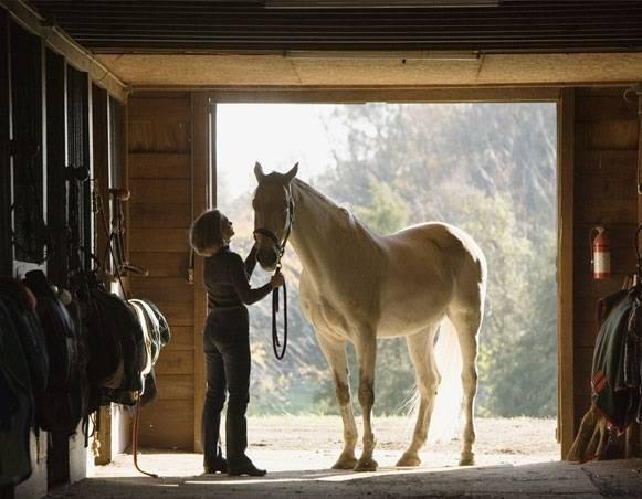 Сколько живут лошади – как определить возраст животного, сколько живут лошади по человеческим меркам?