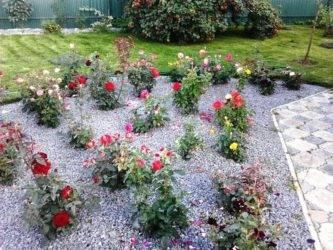 Розарий на даче своими руками - все гениальное просто! | красивый дом и сад