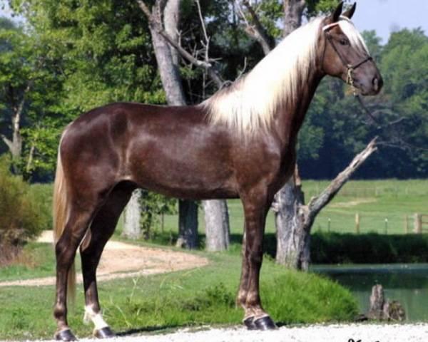✅ каурая масть лошади: какого цвета каурая лошадь, описание, расцветки - tehnomir32.ru