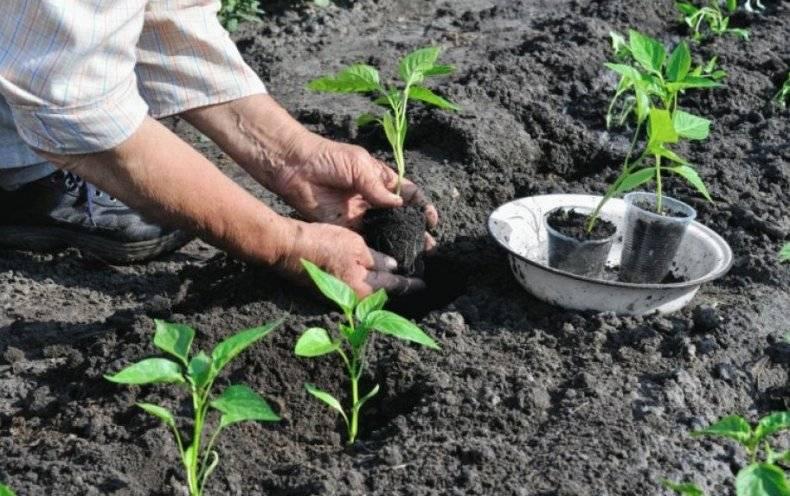 Когда на урале сажать на рассаду перцы, баклажаны, помидоры: лунный календарь с благоприятными днями