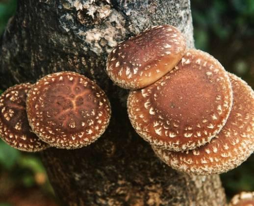 Самые дорогие грибы в мире: список :: businessman.ru