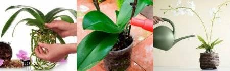 Как поливать орхидеи в домашних условиях: пошаговая инструкция