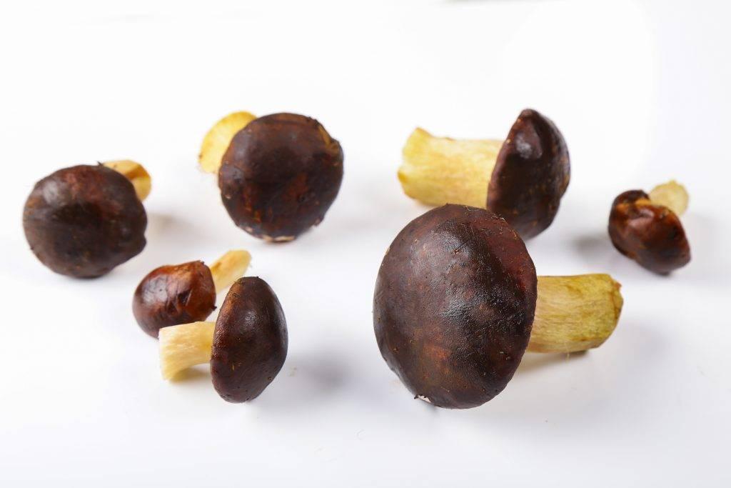 Редкие и чрезвычайно полезные польские грибы