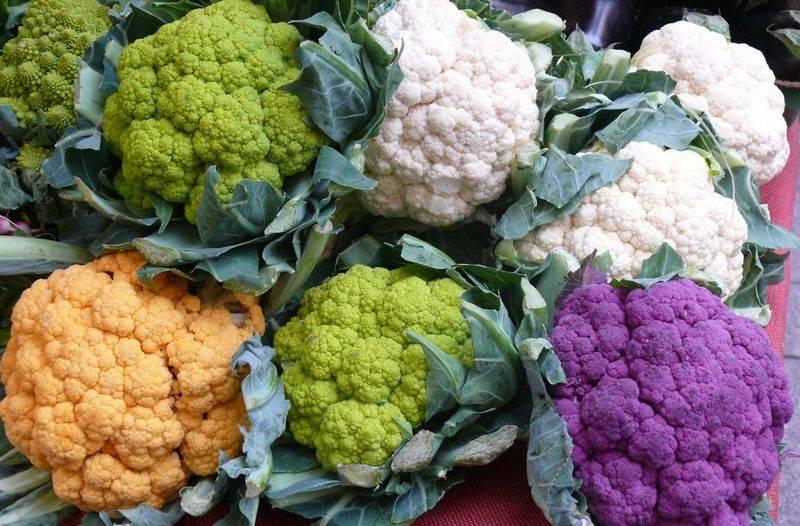 Лучшие сорта цветной капусты для открытого грунта: ранние и поздние. для подмосковья и средней полосы
