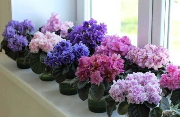 Самые красивые и необычные домашние цветы