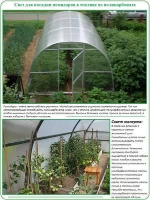 При какой температуре можно высаживать помидоры