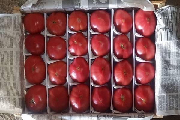 Как правильно выращивать помидоры пинк парадайз