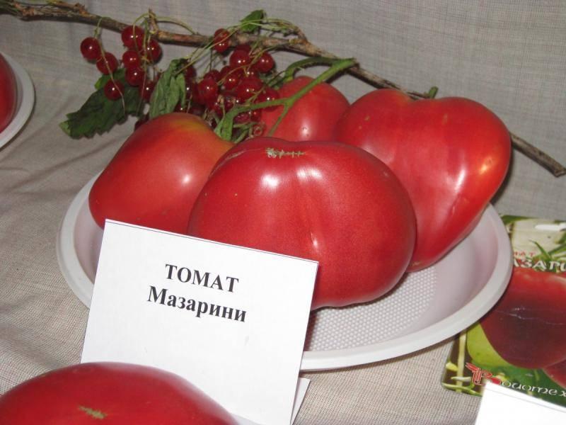 Томат «мазарини»: характеристика и описание сорта